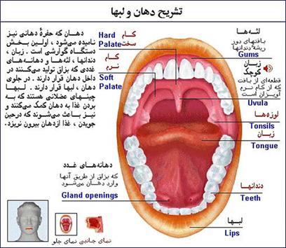 بیماریهای دهان